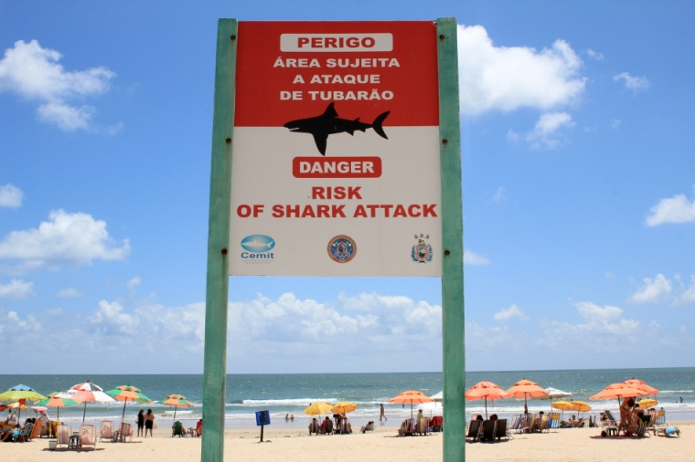 6-Quotidien-Affiche-Attaque-Requins-Recife-Pernambuco-Bresil©TerraTributa (1)