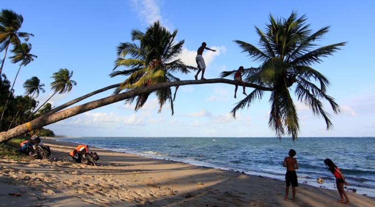 Jeunes singes équilibristes à la plage de Patacho