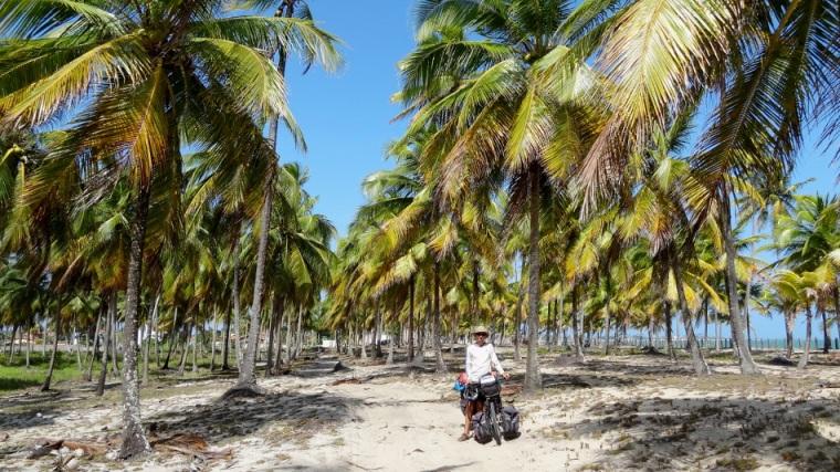 Plantation de cocotiers sur le bord de l'eau