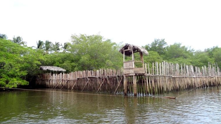 L'accès au site de la rivière Tatuamunha est limité à 70 personnes par jour. Nous avons pu y voir l'enclot où les lamantins sont -----. De plus, nous avons apercu de loin deux lamantins en train de se nourrir d'herbes flottantes.