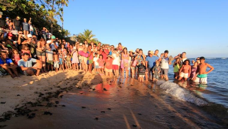 D'octobre à mars, lorsqu'un nid de tortue éclot au centre des visiteurs, les petites tortues sont remises en liberté devant une foule émerveillée ! Sur 1000 tortues rejoignant l'eau, seulement deux deviendront adultes (0,2 %).